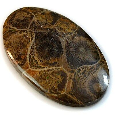 32.5Ct Natural Moroccan Fossil Coral (39mm X 25mm) Cabochon