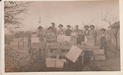 Packing Apples Before Packing Houses, Early Real Photo Postcard.