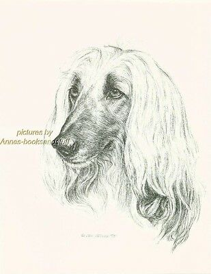 # 59 AFGHAN HOUND dog art print * Pen and ink drawing * Jan Jellins