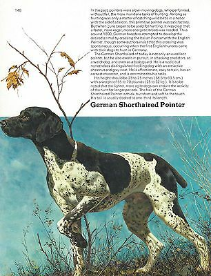 German Shorthaired Pointer Dog Print - 1976 Cozzaglio