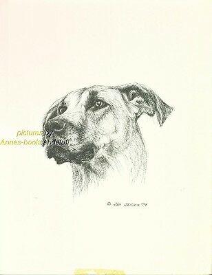 #22 GREAT DANE uncropped  dog art print * Pen and ink drawing * Jan Jellins