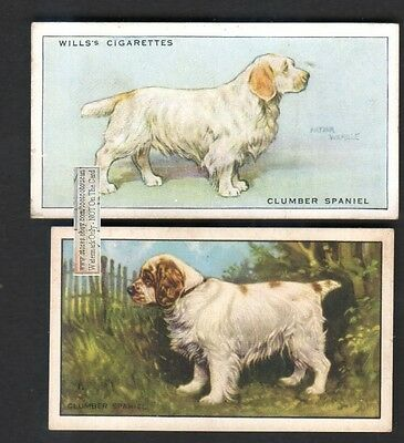 Clumber Spaniel Dogs 2 Different 75+ Y/O Ad Trade Cards
