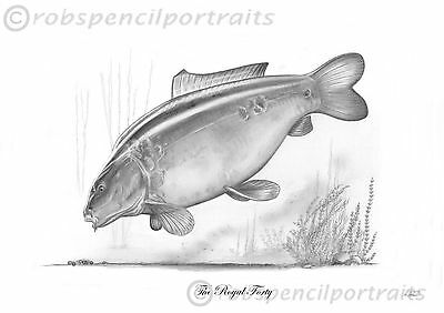 THE ROYAL FORTY Classic Famous Carp Pencil Drawing Print By Robin Woolnough