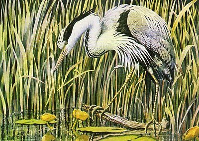 ART postcard of HERON BIRD by JOHN TENNENT