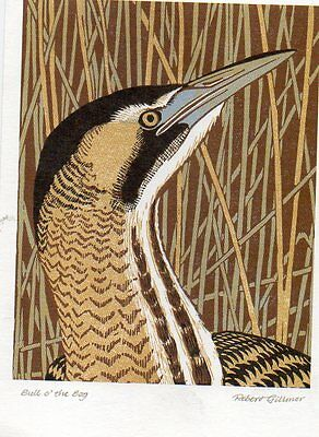 ART postcard of BITTERN BIRD by ROBERT GILLMOR