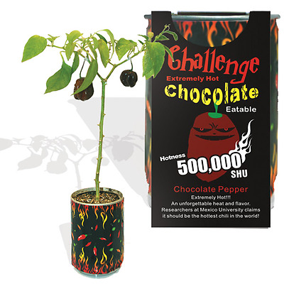 Chocolate Habanero Pepper Growing Kit Can  All Included Grow Your Own Peppers