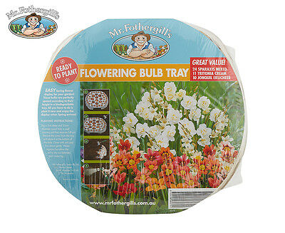 Mr. Fothergill's Ready To Plant Flowering Bulb Tray - Jonquil & Friends