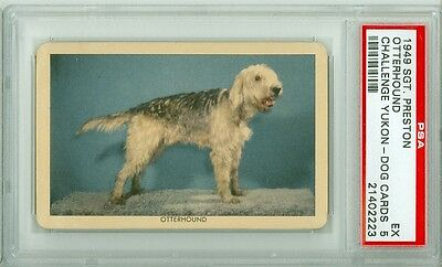 1949 Quaker Sergeant Preston Challenge of Yukon Dogs OTTERHOUND PSA 5