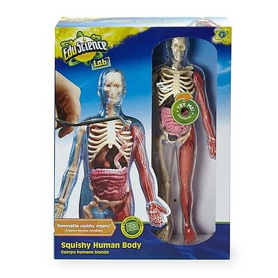 Edu Science Squishy Human Body