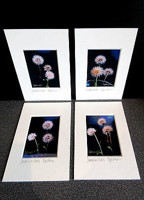 Dandelions x 4 mini art prints from original photographs by Suzanne Patterson.