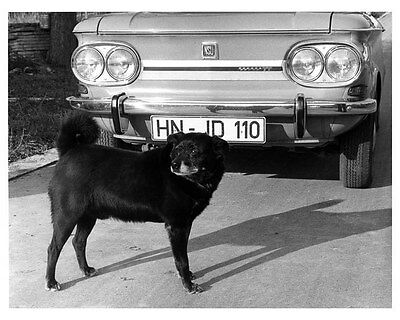 1968 NSU Audi And Dog ORIGINAL Factory Photo oua9022