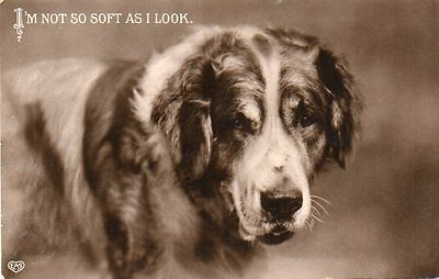 VINTAGE EAS postcard of ST BERNARD DOG 1911