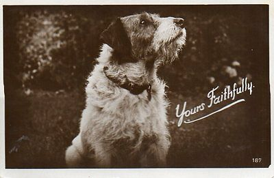 VINTAGE postcard of TERRIER DOG