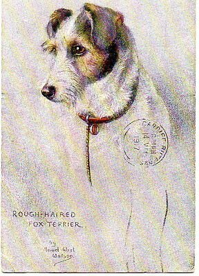 VINTAGE TUCK SKETCHES OF DOGS postcard of ROUGH HAIRED FOX TERRIER DOG Weston