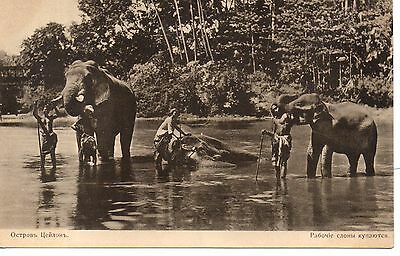 Great Russia published Elephant P/Card in India. C1910 Good