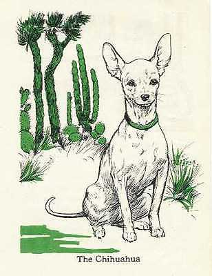 Chihuahua - Vintage Dog Print - 1940 D. Thorne ATW