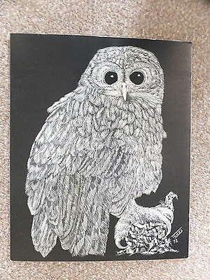 Engraved art vintage picture black & white owl 1978 10 x 12 inches Scraper board