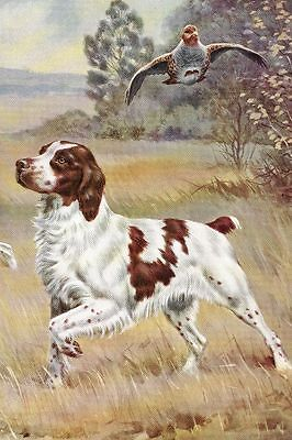 Brittany Spaniel - Vintage Color Dog Print - MATTED