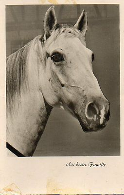VINTAGE postcard of GREY HORSE