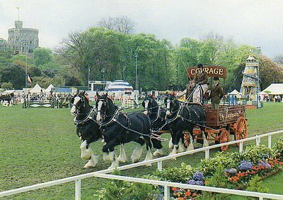postcard of COURAGE SHIRE HORSE TEAM