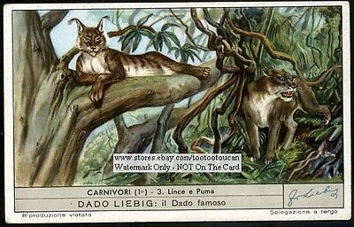 Lynx And Puma Large Wild Cat NICE 60+ Y/O Trade Ad  Card