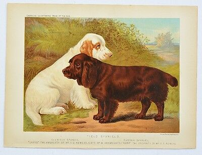 C1890 Chromolithograph The Illustrated Book of the Dog Cassell ~ Clumber Spaniel