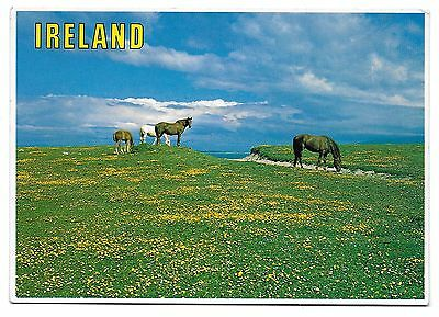 Postcard:  Ireland - General view of Horses