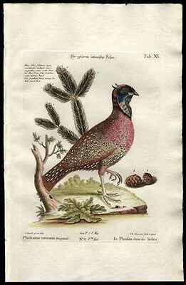 Seligmann-Edwards 1759 Engraved Had-Colored Print The Horned Pheasant Watermark