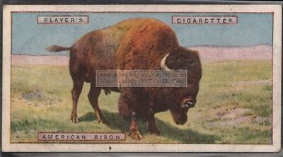 American Bison Buffalo West Plains 1924 Ad Trade Card