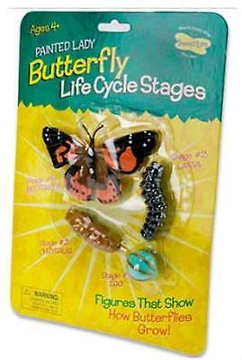 Butterfly Life Cycle Stages Insect Lore Toy Model Larve Egg Caterpillar Age 4+