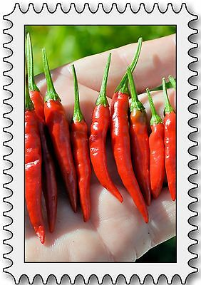 Takanotsume Chilli  10+ seeds