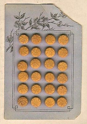 Original Store Card of 24 Bamboo Pattern Vegetable Ivory Buttons