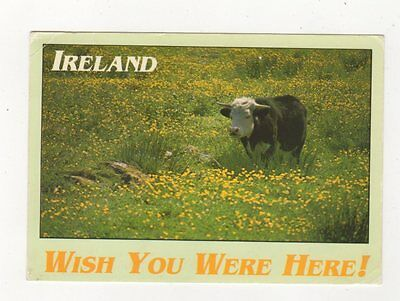 Ireland Wish You Were Here 1993 Postcard Bull / Cattle 876a