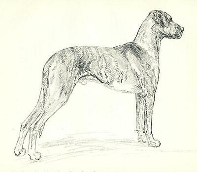 "* Great Dane ""S"" - Vintage Dog Print - 1938 KF Barker"