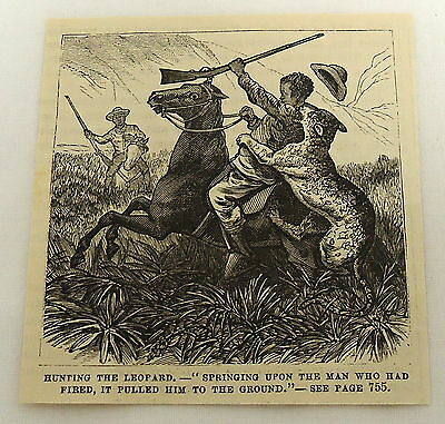 small 1878 magazine engraving ~ AFRICAN AMERICAN MAN ATTACKED BY LEOPARD