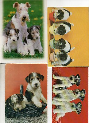 6 postcards of FOX TERRIER DOGS