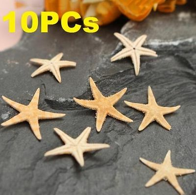 10PCs Mini Natural Starfish Shell Beach Sea Star Landscape Crafts Making Decor