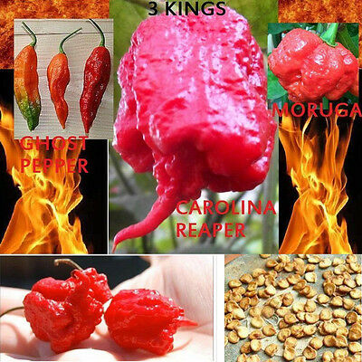 COMBO PACK Ghost Pepper Carolina Reaper Trinidad Moruga Scorpion Hot Chili Seeds