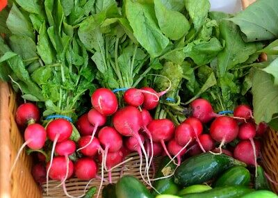 RADISH 'Cherry Belle' 80+ seeds vegetable garden EASY TO GROW eat in 8 weeks red