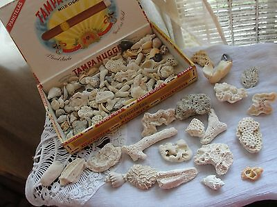 """Lot Of Sea Shells And Coral 100 Piece Collection From 1/2"""" To 2.5"""" Collectibles"""