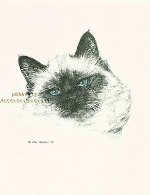 #115 HIMALAYAN CAT  * cat art print * pen & ink drawing by Jan Jellins