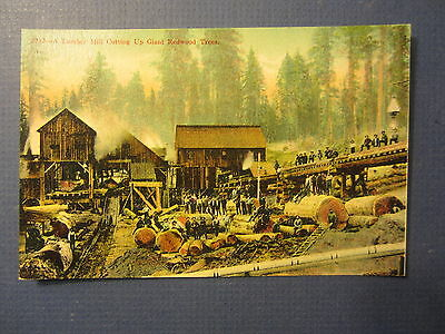 Old c.1910 Western LUMBER MILL - POSTCARD - Cutting GIANT REDWOOD TREES