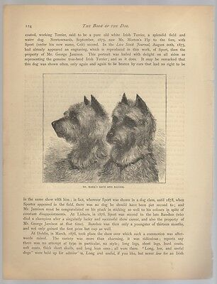 IRISH TERRIER PAIR LITHOGRAPH The Book Of The Dog c.1930s