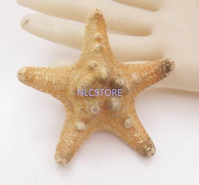 beauty 70mm natural Orange Starfish shell Collectibles Star shell Rock