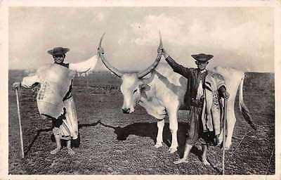 Hungary Ungheria Farmers with Ox Real Photo Antique Postcard J66579