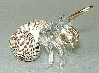 HERMIT CRAB Natural Shell Ornament Curio Display Animal Sea Marine Ocean Gift