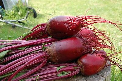 BEETROOT 'Cylindra' 50 seeds HEIRLOOM unusual long EASY TO CUT vegetable garden