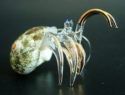HERMIT-CRAB Shell Curio Display Ornament Glass Marine Sea life Tropical Ocean