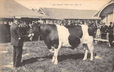 York Pennsylvania Fair Cow Winner Antique Postcard K65223