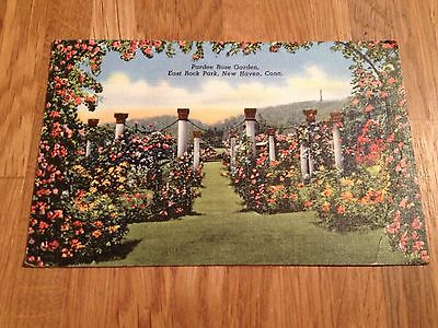 Vintage Postcard of 'Pardee Rose Garden' New Haven, Conneticut, USA - 1944